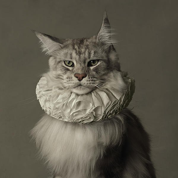 Marie Cécile Thijs, Cat with White Collar.